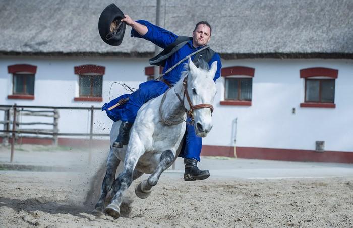 pferdevorführung 7