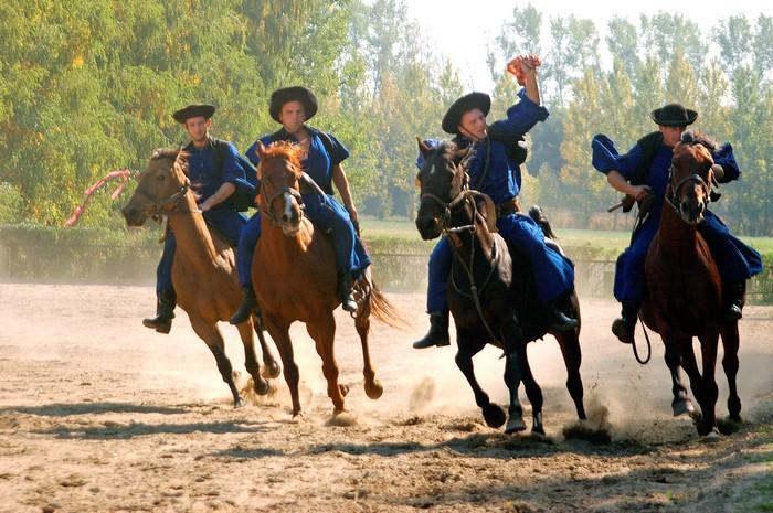 pferdevorführung 4