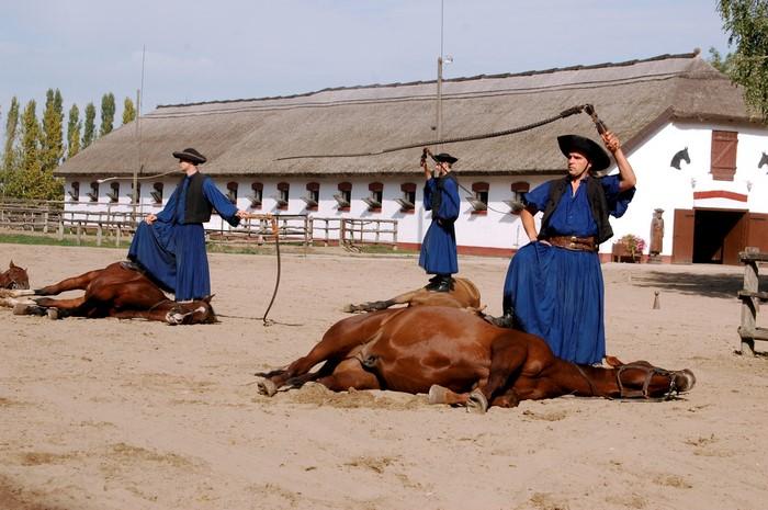 pferdevorführung 3