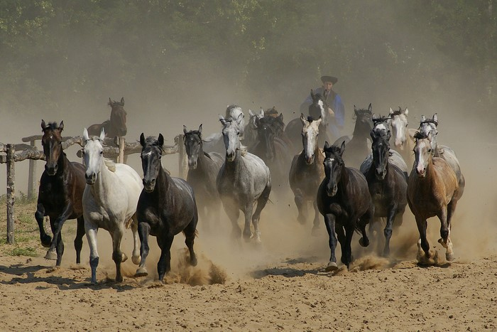 horse show 12