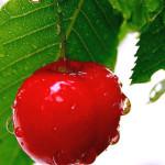 cseresznye 1